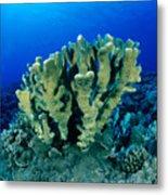 Antler Coral Metal Print