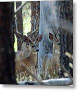 Antlers Galore Metal Print