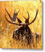 Antlers In The Golden Grass Metal Print