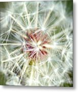 Anything Is Beautiful In The Right Context Metal Print