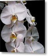 Aphrodite - White Orchid Metal Print