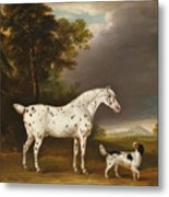 Appaloosa Horse And Spaniel Metal Print
