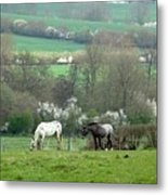 Appaloosa In May Metal Print