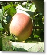 Apple 101 Metal Print