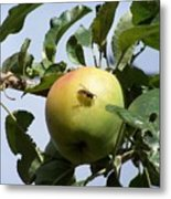 Apple Bee Metal Print