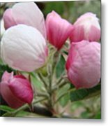 Apple Blossom Buds Art Prints Spring Blossoms Baslee Troutman Metal Print