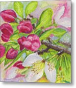Apple Blossom Buds On A Greeting Card Metal Print