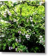 Apple Blossom Digital Painting Metal Print