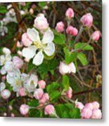 Apple Blossom Pink Metal Print