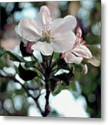 Apple Blossom Time Metal Print