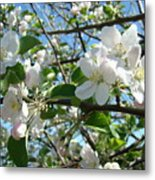 Apple Blossoms Art Prints 60 Spring Apple Tree Blossoms Blue Sky Landscape Metal Print