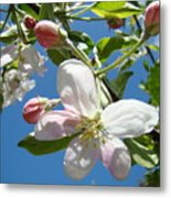 Apple Blossoms Art Prints Blue Sky Spring Baslee Troutman Metal Print
