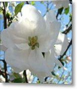 Apple Blossoms Art Prints Canvas Spring Tree Blossom Baslee Troutman Metal Print