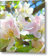 Apple Blossoms Art Prints Spring Trees Baslee Troutman Metal Print