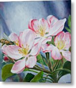 Apple Blossoms With Honeybee Metal Print