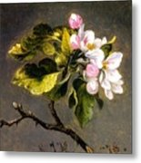 Apple Blossomss Metal Print