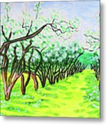 Apple Garden In Blossom Metal Print