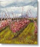 Apple Hill Springtime Metal Print
