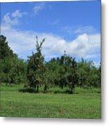 Apple Orchard At Vineyard Metal Print