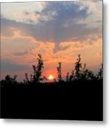 Apple Orchard Silhouette Metal Print