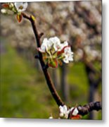 Apple Promise Metal Print