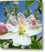 Apple Tree Blossom Art Prints Springtime Nature Baslee Troutman Metal Print