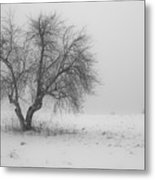 Apple Tree In The Winter Metal Print