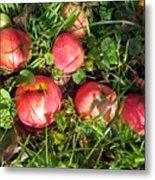 Apples From My Garden Metal Print