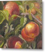 Apples In The Orchard Metal Print