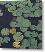 Approaching Lilly Metal Print