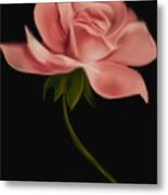 Apricot Beauty Rose Metal Print