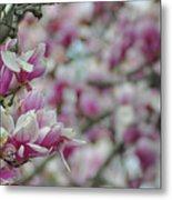 April Blossoms Metal Print