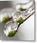 April Ice Storm 5 Metal Print