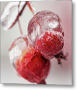April Ice Storm Apples Metal Print