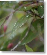 April Showers 1 Metal Print