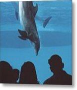 Aquarium Dolphin Metal Print