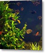 Aquarium Fish And Plants In Zoo Metal Print