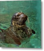 Aquarium Seal  Metal Print