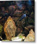Aquarium Stones Arrangement Metal Print