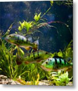 Aquarium Striped Fishes Group Metal Print