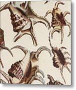 Aquatic Animals - Conch - Shells - Snails Metal Print