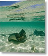 Aquatic Split-level View Of Two Metal Print by Wolcott Henry