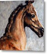 Arabian Foal Metal Print