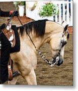 Arabian Show Horse 5 Metal Print