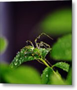 Arachnishower Metal Print
