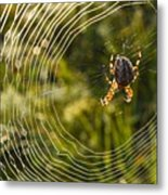 Araneus Morning Metal Print
