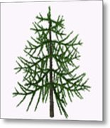 Araucaria Sp Tree Metal Print