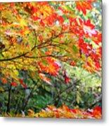 Arboretum Autumn Leaves Metal Print