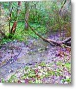 Arboretum Creek Painted Metal Print