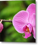 Arboretum Tropical House Orchid Metal Print